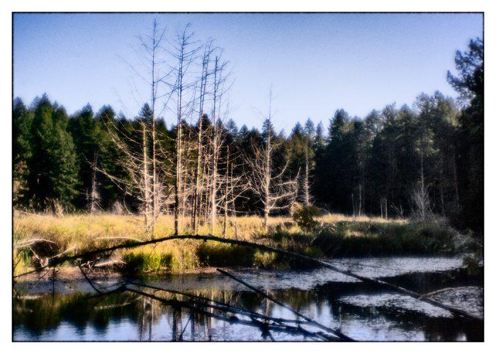 Prospect Landscape
